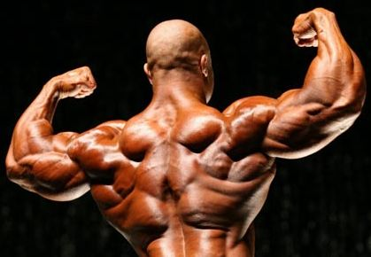 http://www.ratemyarms.com/wp-content/uploads/2010/03/phil-heath-how-to-build-muscle1.jpg